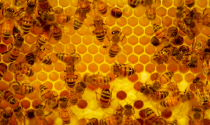 Raw honey cured my allergy symptoms